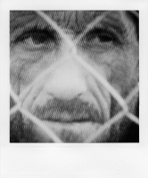 http://bertrandcarriere.com/files/gimgs/th-38_01polaroids of war.jpg