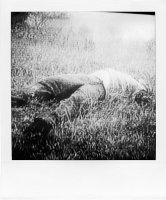 http://bertrandcarriere.com/files/gimgs/th-38_18polaroids of war.jpg