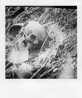 http://bertrandcarriere.com/files/gimgs/th-38_29polaroids of war.jpg
